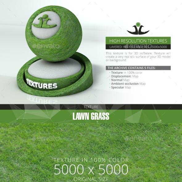Lawn Grass 2