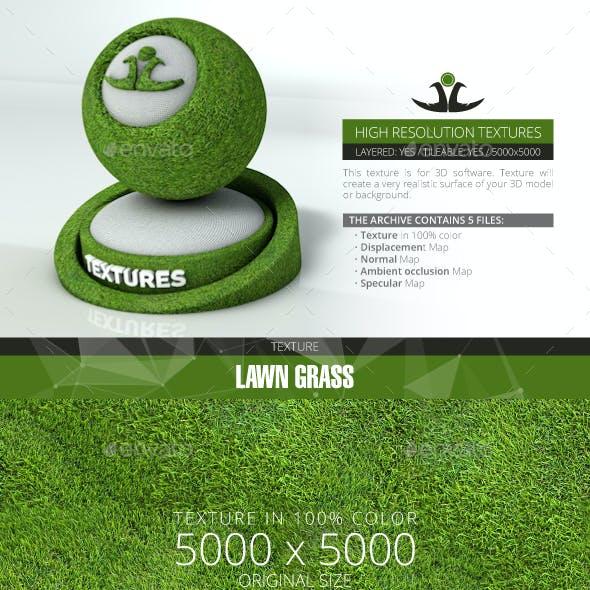 Lawn Grass 3
