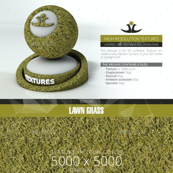 Lawn Grass 4