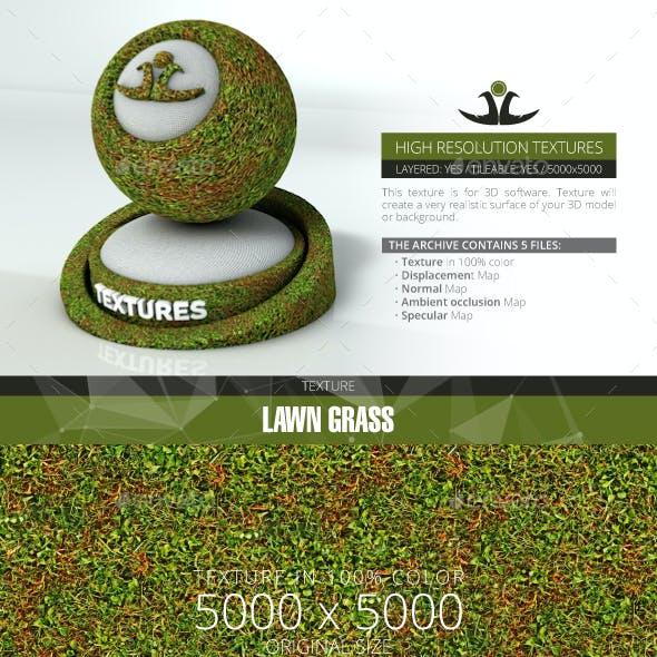Lawn Grass 5