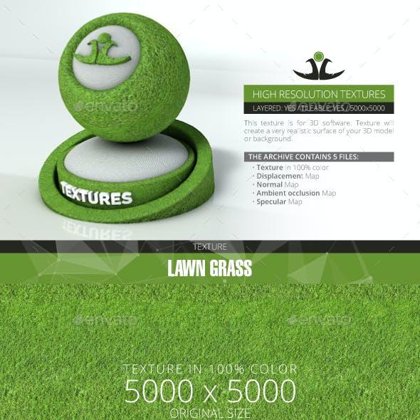 Lawn Grass 10