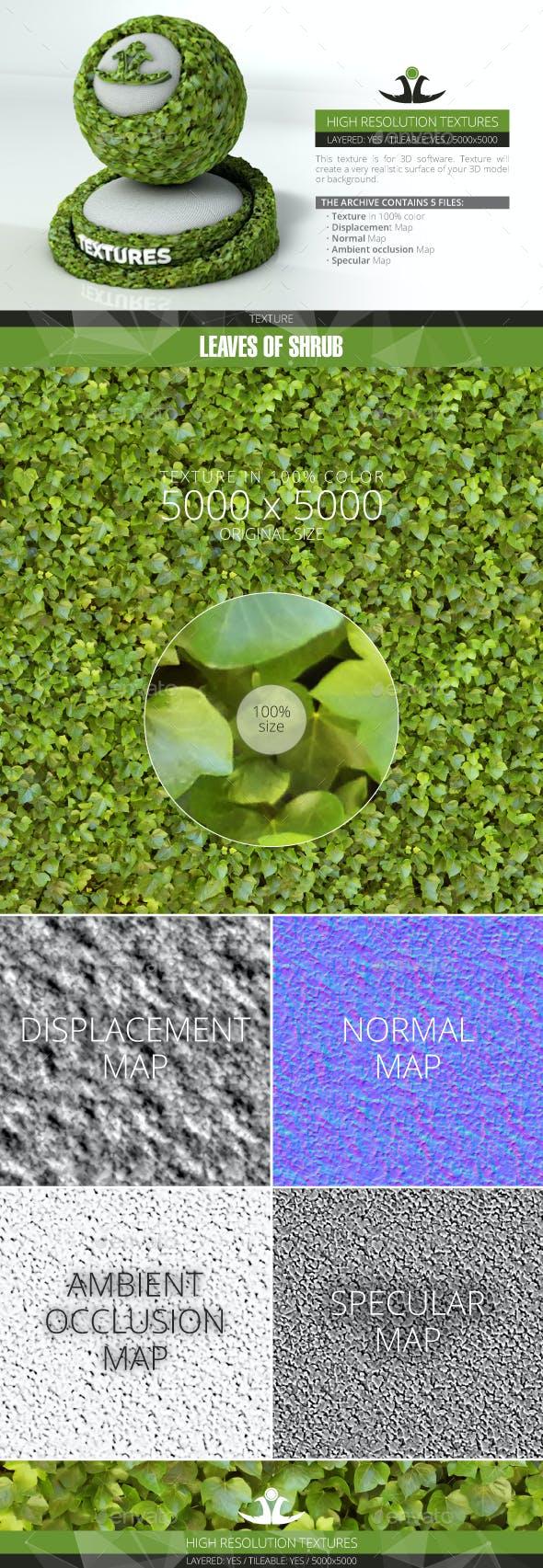 Leaves of Shrub - 3DOcean Item for Sale