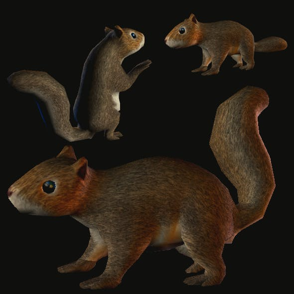 Squirrel in Lowpoly