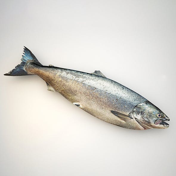 Raw salmon fish - 3DOcean Item for Sale