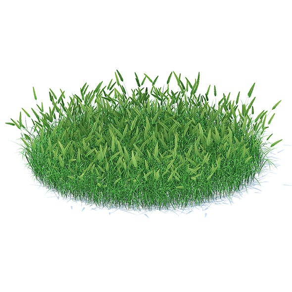 Flowering Grass 3D Model - 3DOcean Item for Sale