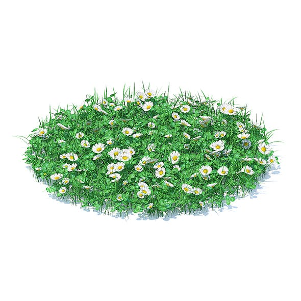 Grass with Clover and Daises 3D Model