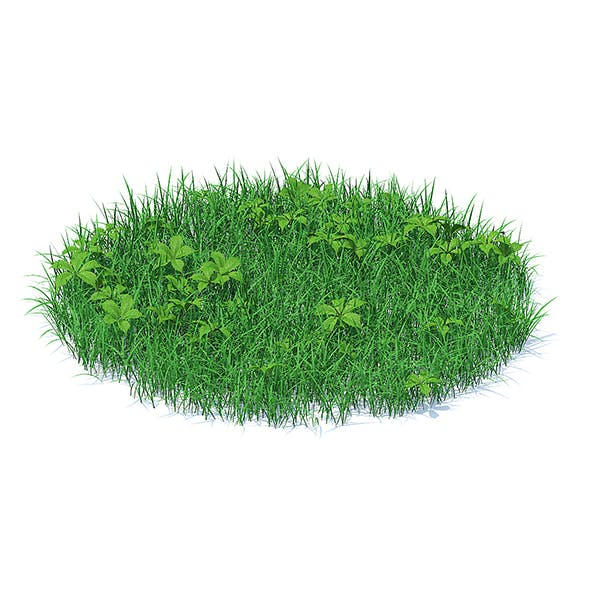 Grass with Plants 3D Model by CGAxis | 3DOcean