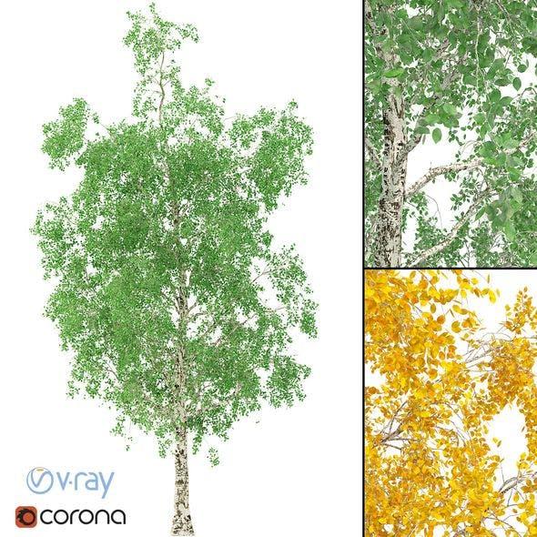 Birch Tree 3d Model No 1 (3 Seasons) - 3DOcean Item for Sale