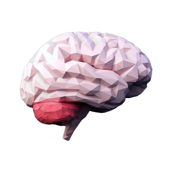 Low Poly Brain - 3DOcean Item for Sale