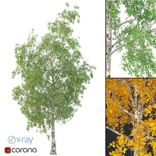 Birch Tree 3d Model No 2 (3 seasons) - 3DOcean Item for Sale