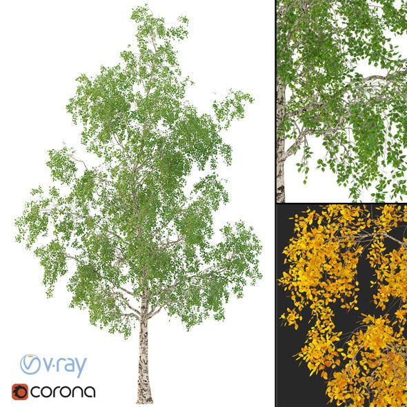 Birch Tree 3d Model No 3 (3 seasons)