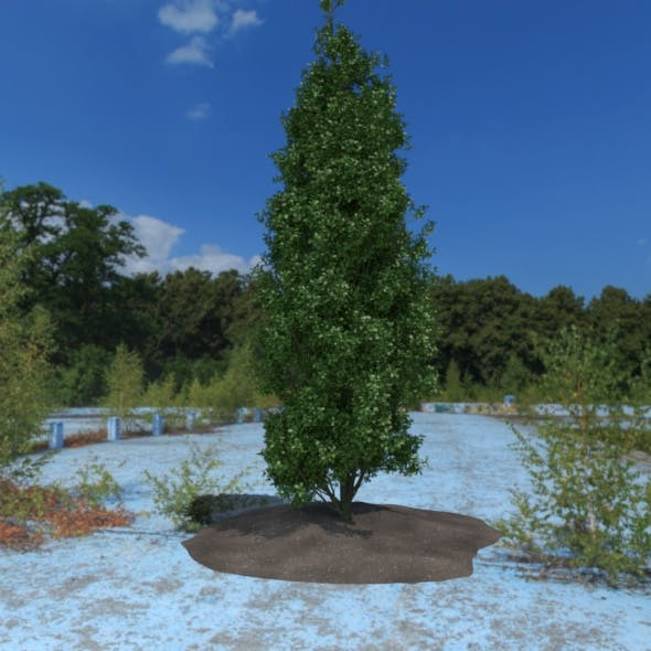 3D Tree - 3DOcean Item for Sale
