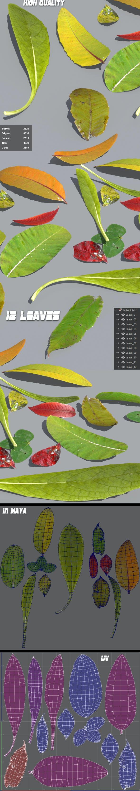Leaves - 3DOcean Item for Sale