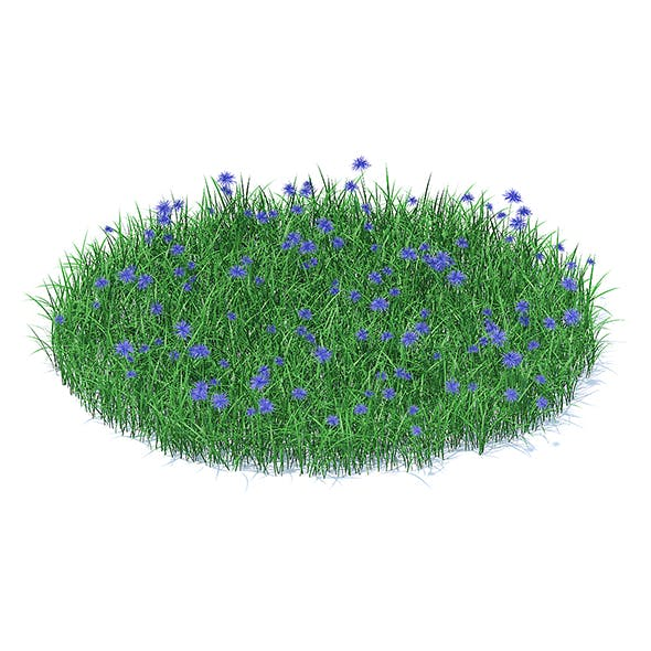 Grass with Cornflowers 3D Model - 3DOcean Item for Sale
