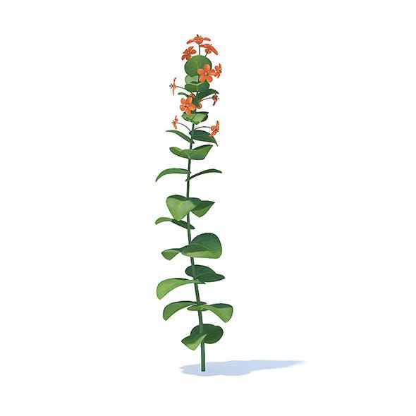 Scarlet Pimpernel 3D Model - 3DOcean Item for Sale