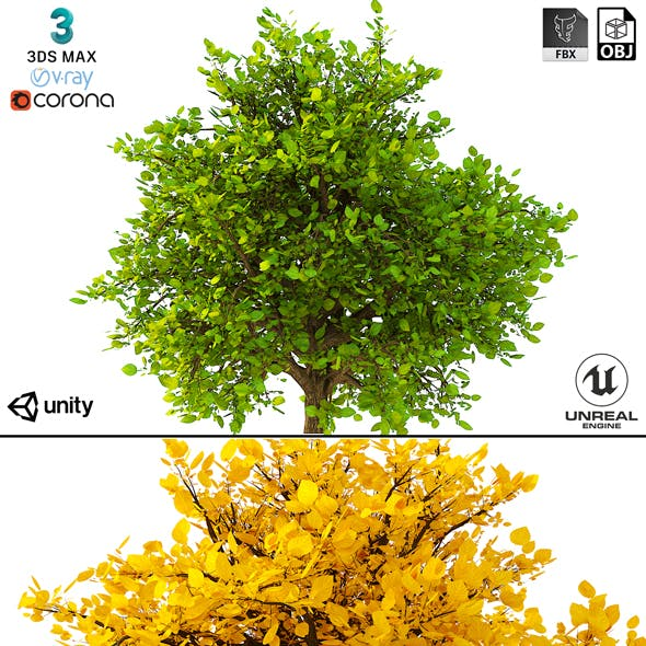 Bush 3d Model No 2 (3 Seasons) - 3DOcean Item for Sale