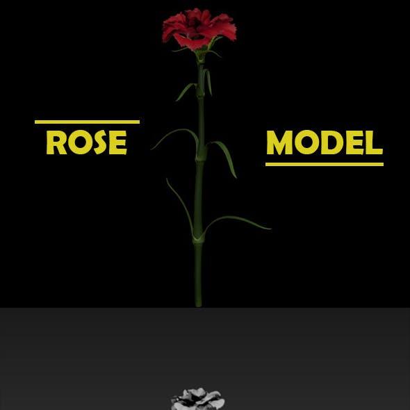 3D Model - Rose