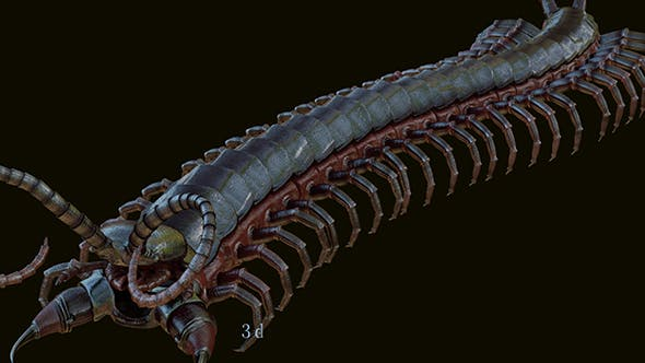 centipede - 3DOcean Item for Sale