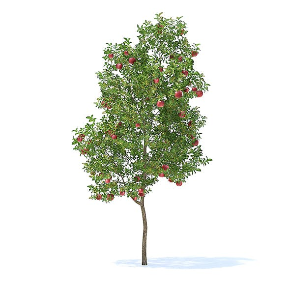 Apple Tree with Fruits 3D Model 3.8m - 3DOcean Item for Sale