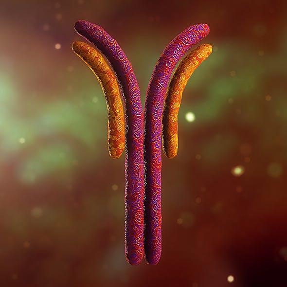Antibody Anatomy Immune biology Cell Human system