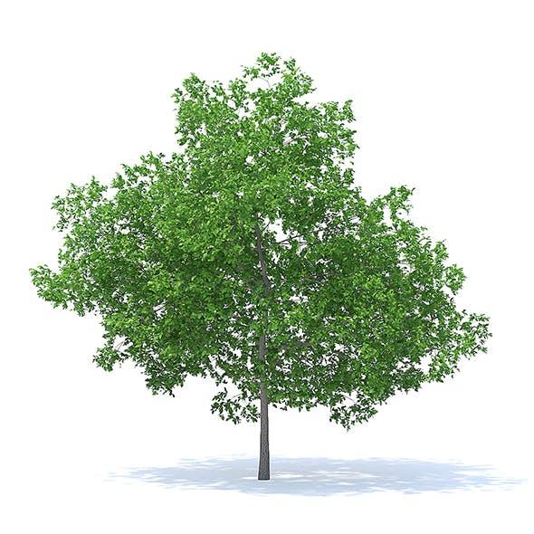 Plum Tree 3D Model 7.1m - 3DOcean Item for Sale