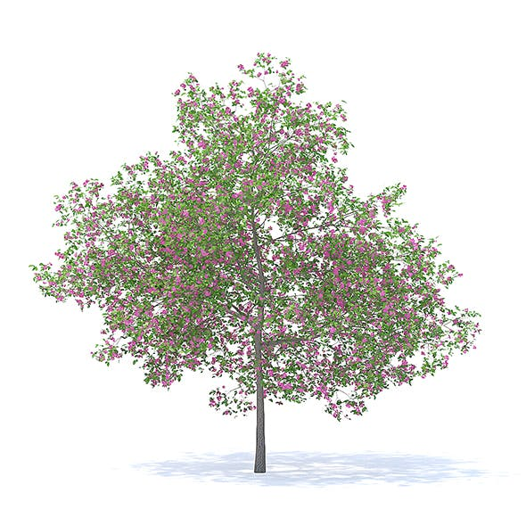 Plum Tree with Flowers 3D Model 7.1m - 3DOcean Item for Sale