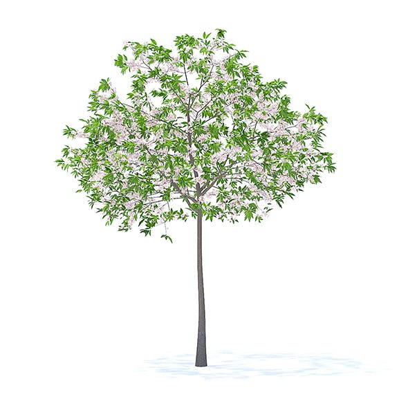 Cherry Tree with Flowers 3D Model 3.3m