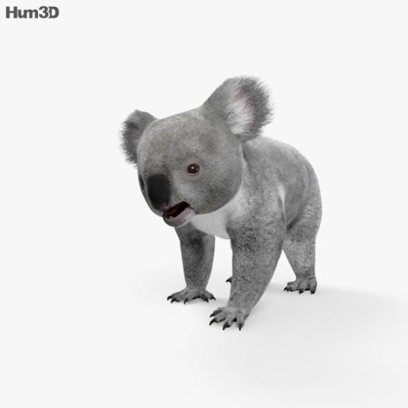 Koala HD - 3DOcean Item for Sale