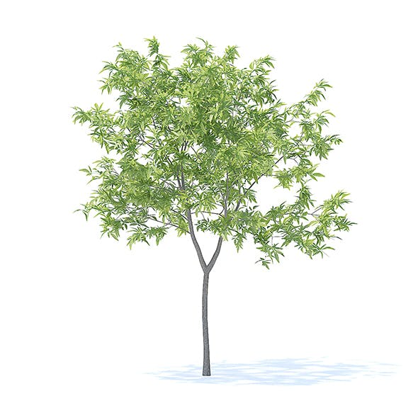Peach Tree 3D Model 2.3m - 3DOcean Item for Sale