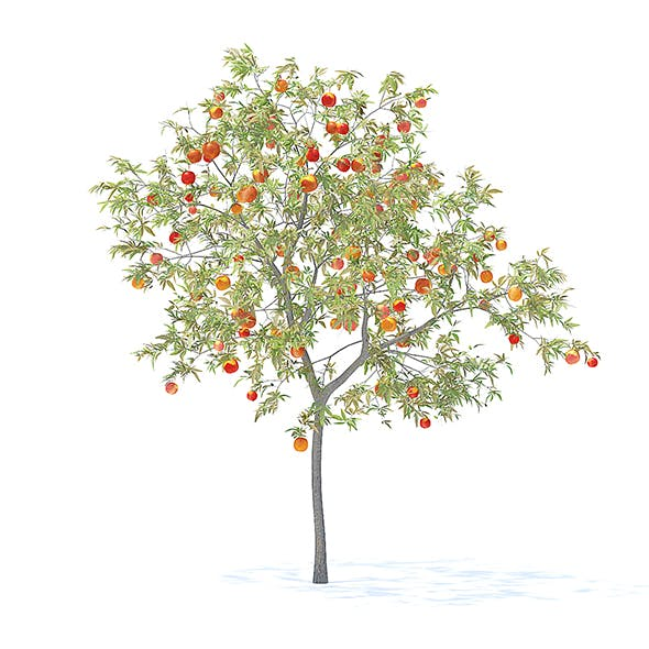 Peach Tree with Fruits 3D Model 3m