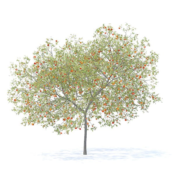 Peach Tree with Fruits 3D Model 5.8m