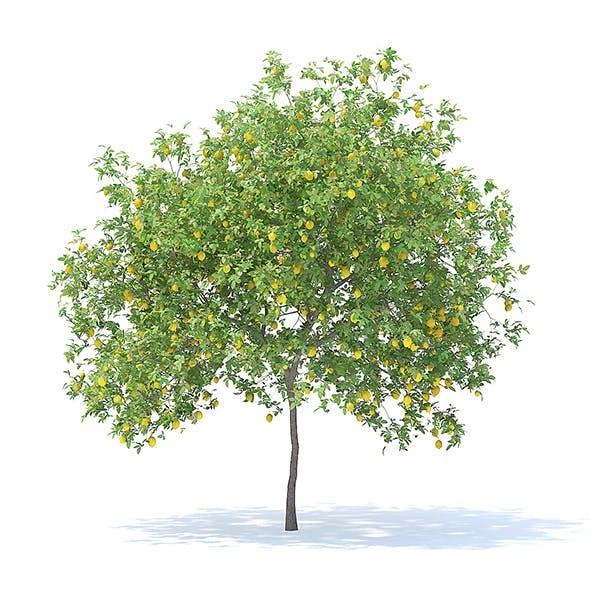 Lemon Tree with Fruits 3D Model 4.4m - 3DOcean Item for Sale