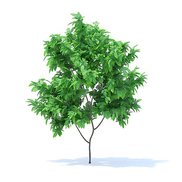 Orange Tree 3D Model 1.6m - 3DOcean Item for Sale