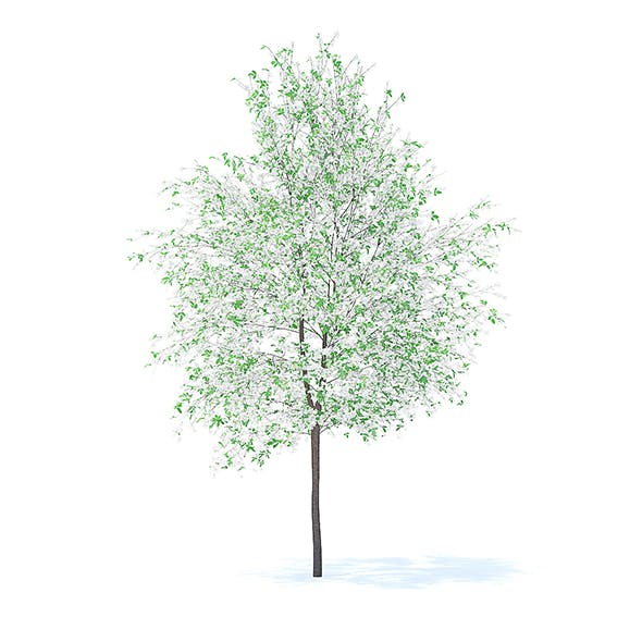 Orange Tree with Flowers 3D Model 6m - 3DOcean Item for Sale