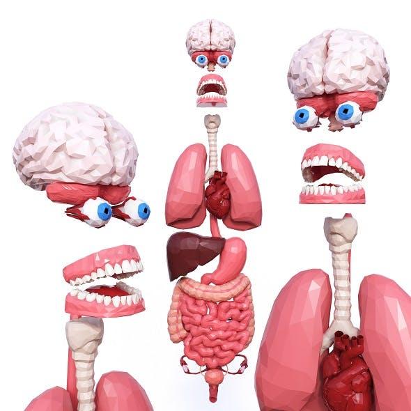 Internal Organs Low Poly - 3DOcean Item for Sale