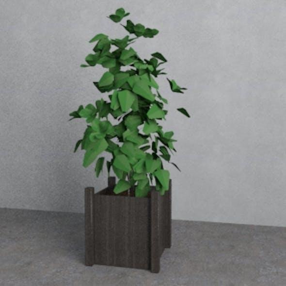 plant pots - Decoration Interior