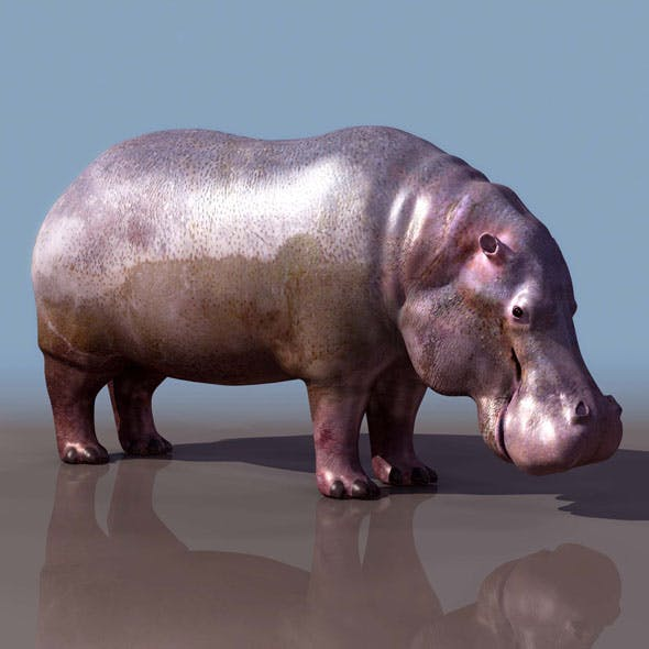 Hippo 3d - 3DOcean Item for Sale