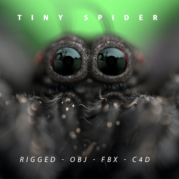 Tiny Spider Rigged 3D Model