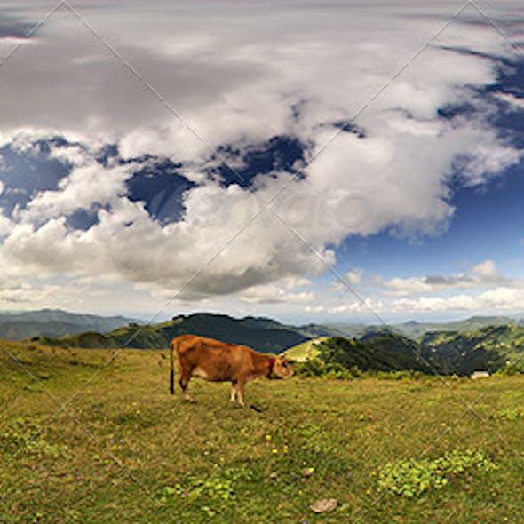 HDRi Images Nature