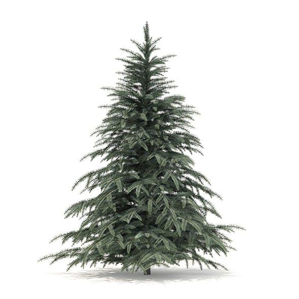 Spruce Tree 3D Model 2.3m