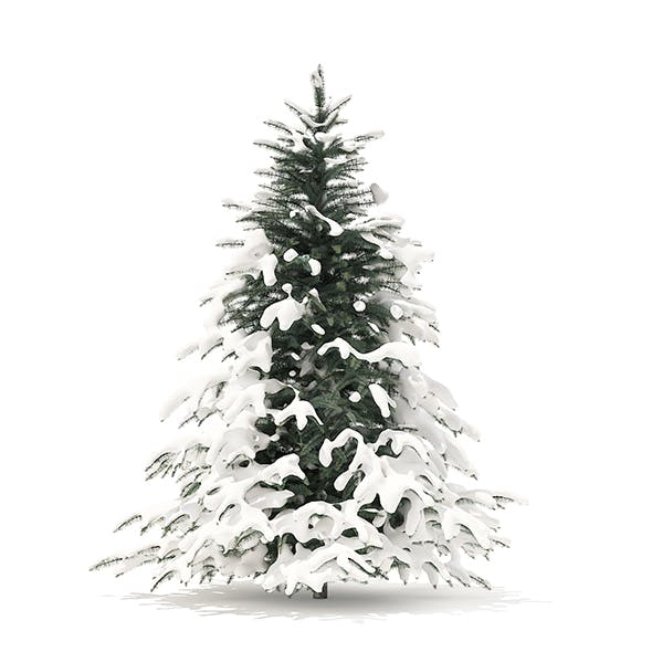 Spruce Tree with Snow 3D Model 2.3m