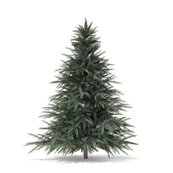 Spruce Tree 3D Model 1.6m