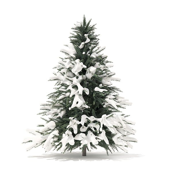 Spruce Tree with Snow 3D Model 1.6m