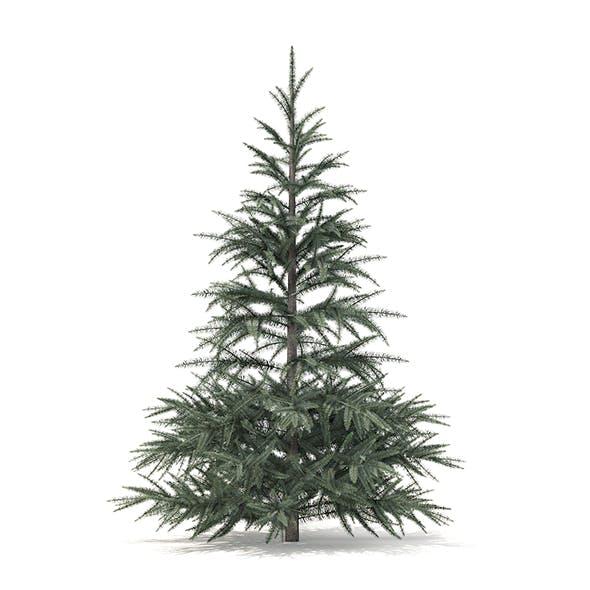 Spruce Tree 3D Model 1.5m