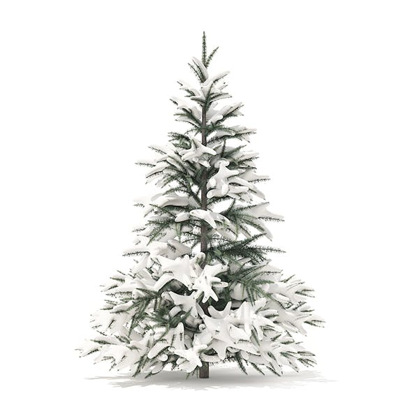 Spruce Tree with Snow 3D Model 1.5m
