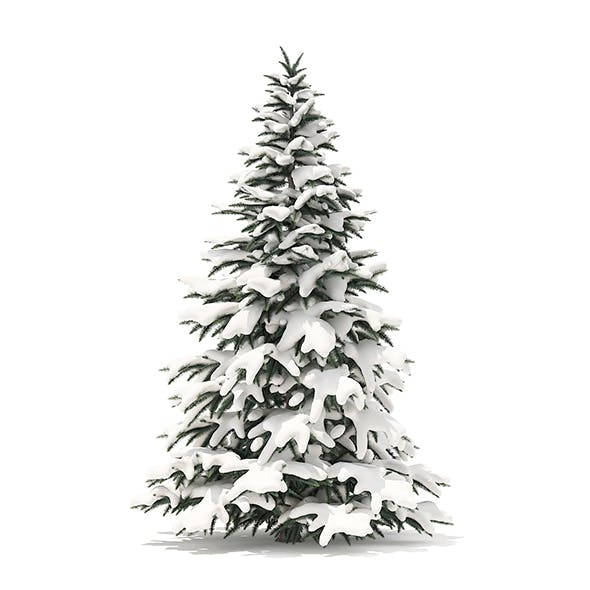 Spruce Tree with Snow 3D Model 2.8m
