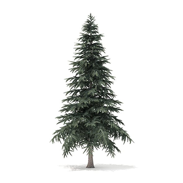 Spruce Tree 3D Model 4.4m - 3DOcean Item for Sale