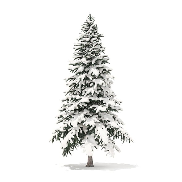 Spruce Tree with Snow 3D Model 4.4m