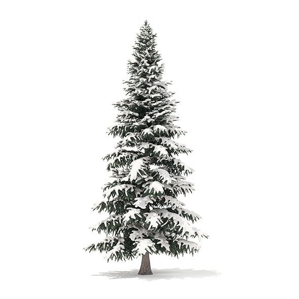 Spruce Tree with Snow 3D Model 8m - 3DOcean Item for Sale