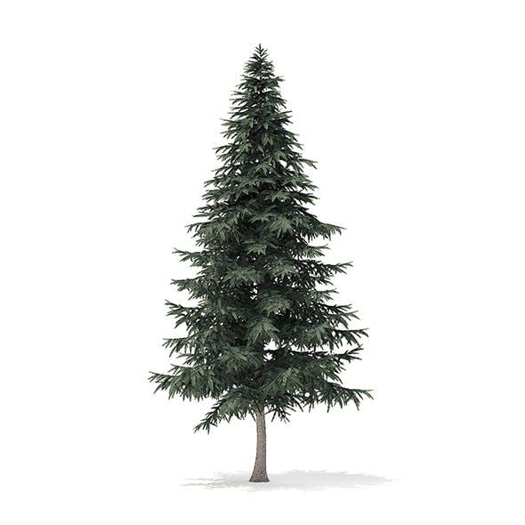 Spruce Tree 3D Model 7.8m - 3DOcean Item for Sale